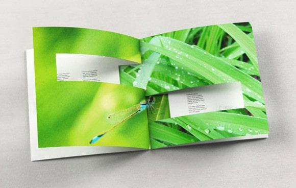 Thiết kế catalogue màu xanh lá cây