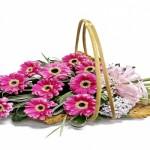 Thiết kế catalogue shop hoa – Giai điệu thuần túy
