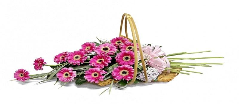 thiết kế catalogue shop hoa