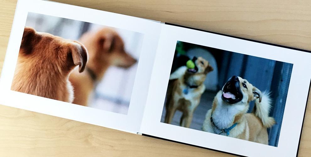 Một cuốn photobok dành riêng cho thú cưng, thật tuyệt vời phải không nào
