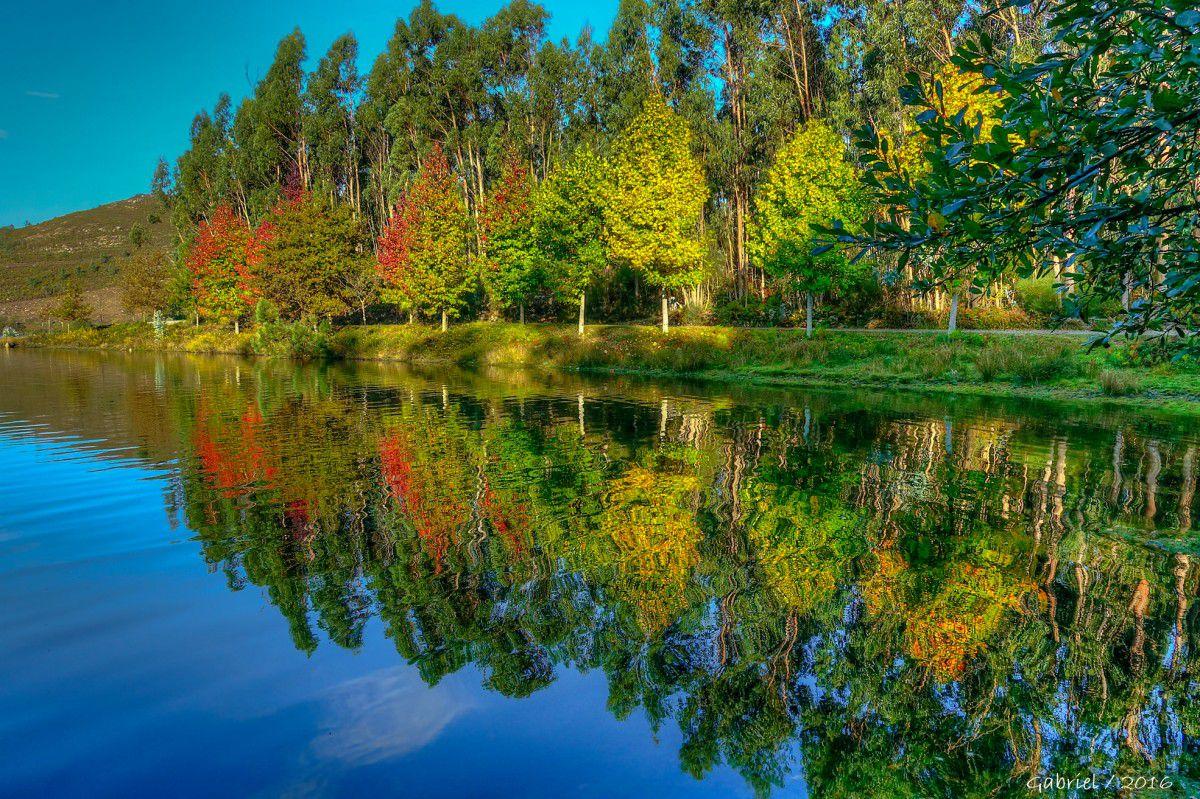 Hình ảnh phản chiếu của khu rừng trên mặt hồ
