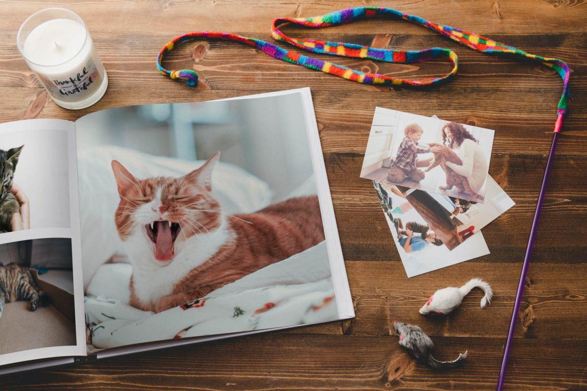 Cuốn photobook dành riêng cho người bạn có lông của gia đình bạn