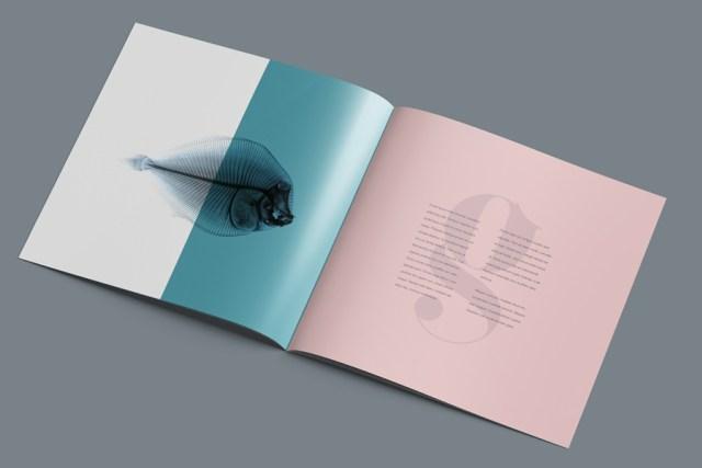 Thiết kế brochure vuông với phong cách tối giản